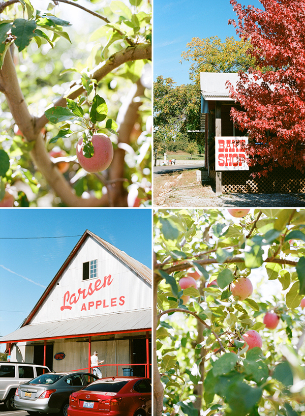 Larsen Apples in Camino California